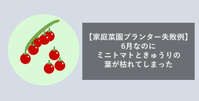 ミニトマト 失敗例